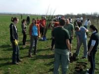 Plantăm fapte bune în România raportează 78.750 copăcei plantați de 4850 voluntari în doi ani de activitate