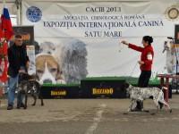 CACIB Satu Mare 2013