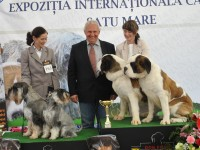 CACIB 2013 Satu Mare, Expozitie caini