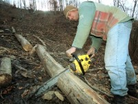 Județul Satu Mare, pe locul doi la tăierile ilegale de păduri private