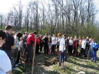 plantare copaci ardud