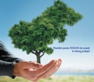 plantare-Consiliul-Judetean