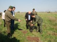 plantare copaci (2)