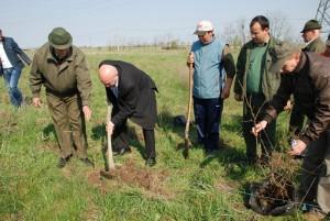 plantare copaci (5)