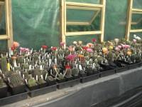 Întâlnirea Asociației Colectionarilor de Cactusi Aztekium Romania