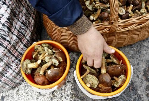 intoxicatii cu ciuperci