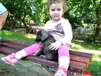 Targ adoptie Free Life Satu Mare