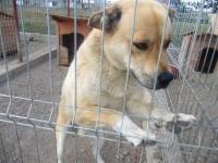 Ia-l acasă: Câine de talie medie, foarte afectuos, oferit spre adopție