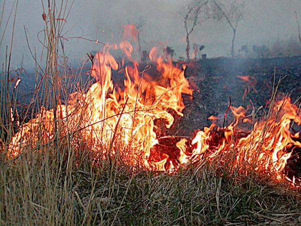 ardere-miriste