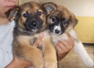 Adoptă un câine de Ziua Internațională a Animalelor fără Stăpân