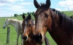 furt cai
