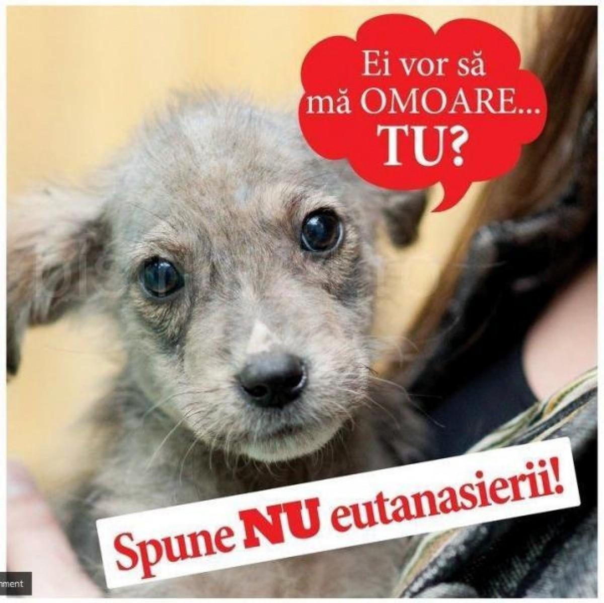 NU eutanasierii, Satu Mare