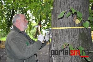 gradina-romei,-evaluare-stare-copaci,-expert-ungaria-(10)