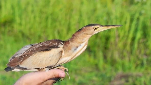 """Zilele Biodiversității în Ariile Protejate """"Râul Tur"""""""