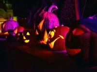 halloween carei (2)