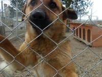 Ia-l acasă: Câine de pază oferit spre adopție