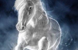 anul calului de foc