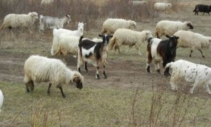 pasunat oi