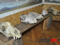 expozitie artefacte de os  (25)