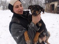 Ia-l acasă: Cățeluș de 7 luni, oferit spre adopție
