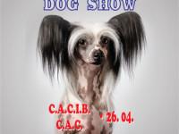 International Dog Show, în week-end la Satu Mare. Sute de câini din 24 de ţări înscrişi în competiţie