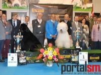 International Dog Show Satu Mare. Bobtailul este din nou câștigătorul primei zile (Galerie FOTO)