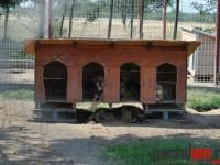 adapostul de caini Satu Mare (1)