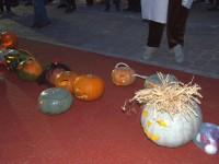 haloween carei (1)