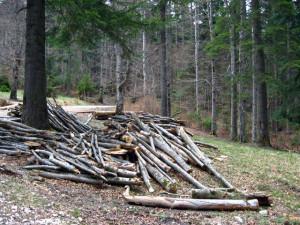 Prinși după ce au tăiat ilegal 72 de arbori