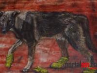 Expozitie Mihai Kirilla (8)