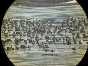 pasari habitat umed