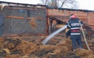 incendiu ferma porci