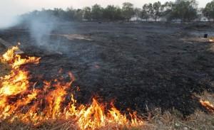 incendiu-vegetatie-uscata
