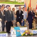 best in show CACIB 2015 (419)
