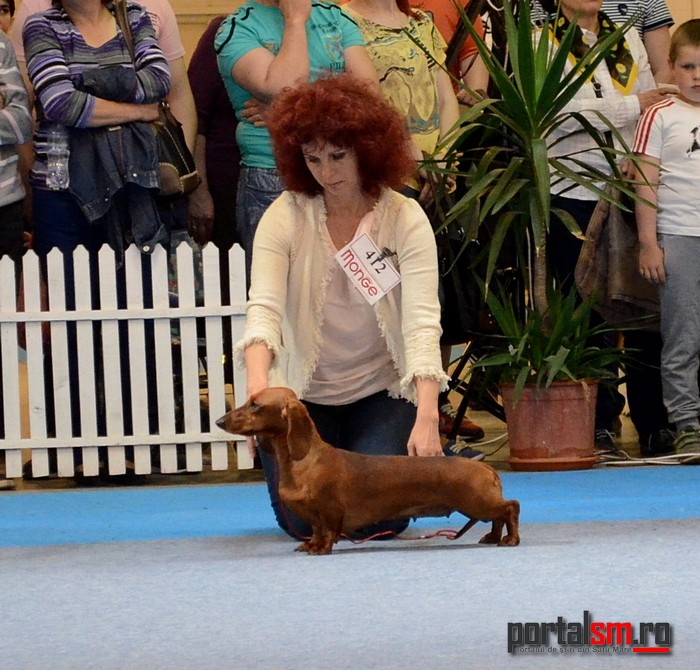 best in show ziua 2 (199)