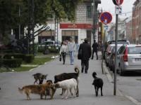 Daily Mail: Londra cere insistent guvernaților români să nu mai sacrifice… câinii comunitari