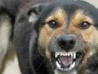 Bărbat mușcat de câinele vecinului