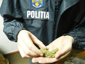 trafic-droguri-cannabis