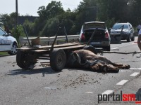 accident vetis (1)