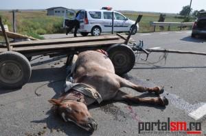 accident vetis (2)