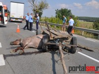 accident vetis (3)