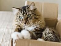 De ce torc pisicile și alte 4 curiozități despre ele