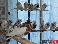 expozitie pasari si animale mici Satu Mare (54)