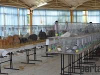 expozitie pasari si animale mici Satu Mare (70)