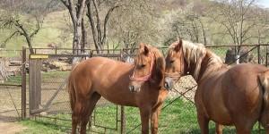 furt de cai