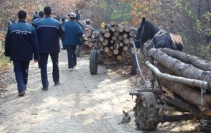 furt de lemne