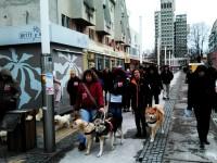 Marș de protest împotriva maltratării animalelor, la Satu Mare (FOTO)