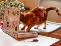 A apărut laptopul pentru pisici