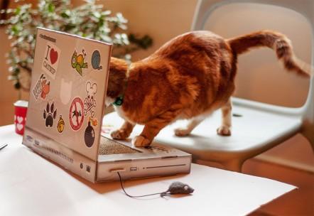 laptopul-pentru-pisici-3-442x304