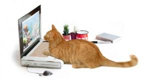 laptopul-pentru-pisici